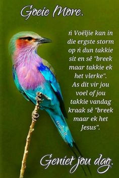 Good Morning Wishes, Day Wishes, Good Morning Quotes, Evening Greetings, Afrikaanse Quotes, Goeie Nag, Goeie More, Prayer Quotes, Christian Inspiration