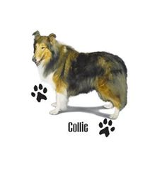 Collie Dog T SHIRT, ( Sweatshirt, Quilt Fabric Block, Tote Bag, Apron, Available On Request) #831 by AlwaysInStitchesCo on Etsy