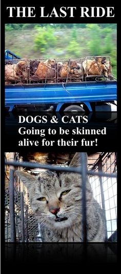 DOGS AND CATS GOING FOR THE LAST RIDE! China going to get dogs and cats for the fur industry every day! SKINNED ALIVE.