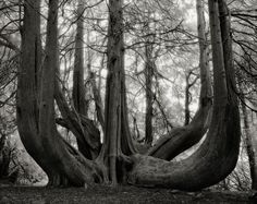 These Ancient Trees Have Stories to Tell #photography #photo http://proof.nationalgeographic.com/2016/03/24/these-ancient-trees-have-stories-to-tell/