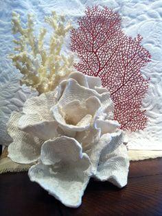 Coral Display