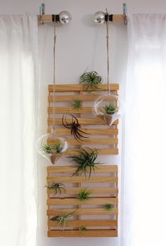 Air plant display