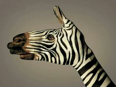 Zebra?
