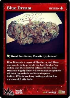 Blue Dream is a cross of Blueberry and Haze and was bred to provide the body high of an indica and the cerebral sativa Cannabis News, Medical Cannabis, Cannabis Oil, Cannabis Edibles, Weed Types, Weed Strains, Buy Cannabis Online, Cbd Oil For Sale, Marijuana Plants