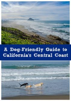 Driving California's Highway 1 with your dog? Check out these tips for traveling with your dog on California's Central Coast: http://www.everintransit.com/dog-friendly-central-coast-california/