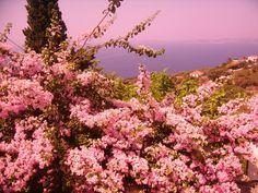 Photos of Skopelos by Greeka members – Greeka.com - Page 4