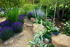 Recent Drought Resistant Landscaping Project here in Folsom, CA Drought Resistant Landscaping, Drought Resistant Plants, Drought Tolerant Landscape, Part Shade Plants, Front Yard Plants, Arizona Gardening, Flowering Succulents, California Native Plants, Outdoor Landscaping