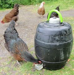Homemade chicken waterer (great idea!)