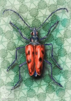 Beatle illustration. Digital painting of animals by Karsten Goetz #illustration #drawing #sketch #procreate #digitalillustration #beatle #bug #insect