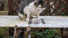 Katzen können nicht nur gemein zu ihren Besitzern sein, sondern auch zu anderen Artgenossen. Wir verraten euch, wie man Mobbing unter Katzen stoppen kann.