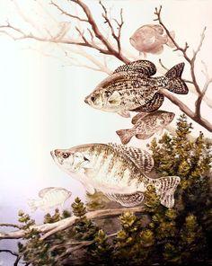 Crappie Fishing Tips, Catfish Fishing, Carp Fishing, Best Fishing, Kayak Fishing, Crappie Bait, Fishing Tricks, Fishing Rods, Fishing Tackle