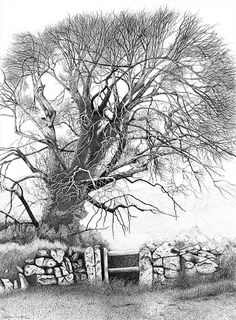 Wych Elm  Limited Edition Signed Print of by DrawnToTheWild, £95.00