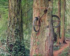 Curiosities: Eating Trees