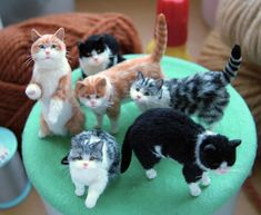 miniature cats