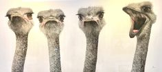 Dominique Salm, ARE YOU LISTENING TO ME? Contemporary Art, Art Gallery, Cute Animals, Handsome, Animals Photos, Emu, Watercolour, Nature, Artist