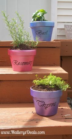Potted Herbs Are A Great Gift For Any Occasion!