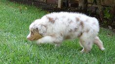 Kora, puppy 8 weeks old
