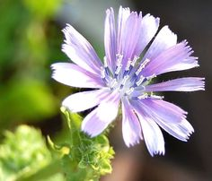 Linda flor com pétalas abertas pronta para ser polinizada
