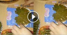 Poşetle Yaprak Sarması nasıl yapılır? Kalem gibi yaprak sarmak izleyeceğiniz bu video ile çok kolay. Poşetle yaprak sarması video karşınızda.