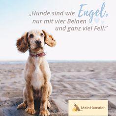 #hundeliebe #seelenhund #meinhaustier #hunde #hund #zitate