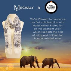 Mechaly aims to address the obstacles & challenges facing cruety against animals. We do so by traveling the world to find amazing stories about extraordinary organizations that share our passion for animal rights. Mechaly collaborates with these organizations to spread their message through creating limited edition products which contribute to advancing their cause. Were Pleased to announce our first collaboration with World Animal Protection on this Elephant Scarf which supports the end of…
