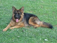 a house isnt a home without a pet <3                  id love to have a german sheperd!