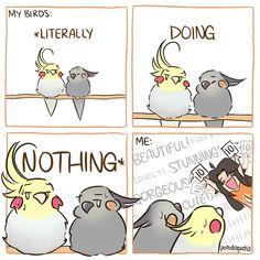 Funny Animal Comics, Funny Animal Memes, Funny Animal Videos, Cute Funny Animals, Funny Cute, Hilarious, Funny Birds, Cute Birds, Cockatiel