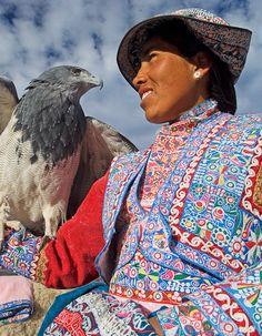 Águila andina. Cañón del Colca
