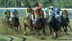 Horse Race Horse Racing Bet, Camel, Horses, Animals, Animales, Animaux, Camels, Animal, Animais