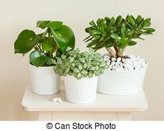 houseplants fittonia albivenis, crassula ovata, peperomia in whi by duskbabe. houseplants fittonia albivenis, crassula ovata, peperomia in white pots Crassula Ovata, Jade Plants, Skin Treatments, Houseplants, Feng Shui, Royalty Free Images, Healthy Skin, Indoor Plants, Planter Pots