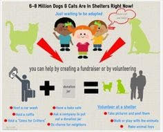 Can #Kids Make a Difference for #Shelter #Animals? Sure can, this graphic helps explain! via @mattiedadog
