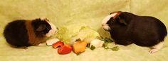 Ozzoe & Smokey Animals, Animales, Animaux, Animal, Animais