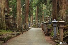 koyasan-okunoin16-1080 Wakayama, Kyoto, Photo Souvenir, Sidewalk, Japan, Good Things, Plants, Circuit, Trains
