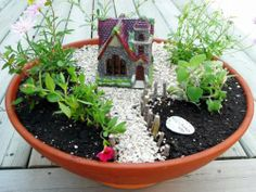 Mini gardens for skillful enthusiasts