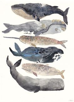 Art | Six Whales - Original Watercolor Painting by Michelle Morin