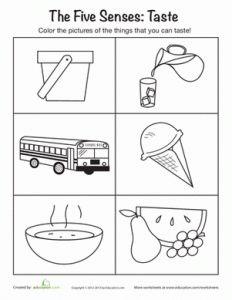 the five senses-taste