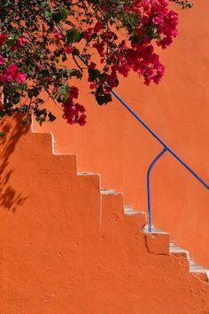 52 super ideas for flowers aesthetic orange
