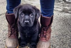 The Most Popular Dog Names of 2015 | Entertainment | PureWow National