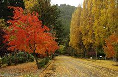 Colores de otoño en la ciudad - San Martín de los Andes