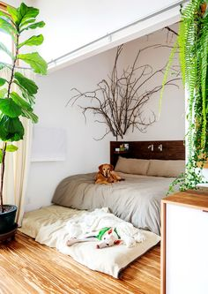 The dogs share the sleeping space, which can be closed off from the main living area with a curtain.