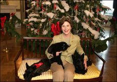 """Mrs. Laura Bush poses with Barney, Miss Beazley and the family cat Willie, nicknamed """"Kitty,"""" Friday, Dec. 1, 2006, next to the White House Christmas Tree in the Blue Room."""
