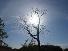 LoneTreeOne Day With Diabetes is when life ceased to exist as known. Living is a challenges of defying nature.