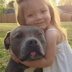 Do you love Pitbull? If yes read the types of Pitbull Breeds that are really popular right now. This list of Pitbull breed is very famous because of their extra ordinary characteristics Cute Puppies, Cute Dogs, Dogs And Puppies, Doggies, Animals And Pets, Baby Animals, Cute Animals, Animals Images, Beautiful Dogs