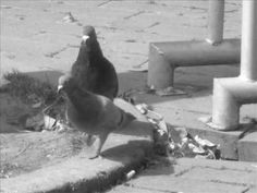 Pedacito de cielo Ignacio Corsini Penguins, Animals, Sky, Animales, Animaux, Penguin, Animal, Animais