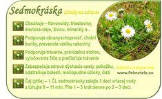 Info sedmokraska - My site Organic Beauty, Raw Food Recipes, Natural Health, Gardening Tips, Life Is Good, Detox, Health Fitness, Herbs, Flowers