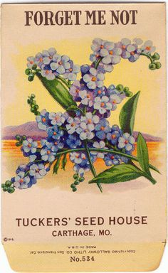 Vintage Seed Pack Art, Forget-Me-Not, Great Small Framable Art