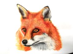 Fox - Watercolour paint and pencil, 2016, Victoria Mead   Visit www.vmportraits.co.uk
