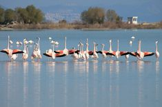 Kos, Flamingo, Greece, Salt, Birds, Island, Nature, Photography, Animals