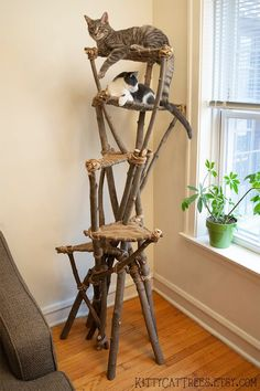 Cat Tree for Climbing Scratching Furniture Scratches, Pet Furniture, Outdoor Cat Tree, Diy Cat Tower, Homemade Cat Tower, Homemade Dog, Cat Climbing Tree, Cat Tree House, Cat Perch