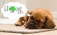 Für einen gesunden und vitalen Hund UDog Spa! Anwendungen die deinem Hund helfen und die Bindung zwischen euch vertieft! #hund #welpe #massage #udogspa #udog #hundetraining #hundeschule #hundeerziehung #hundemassage
